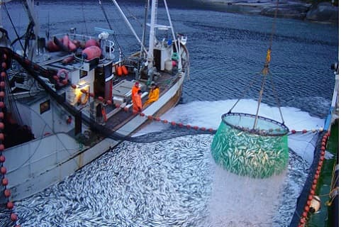 Transitional Provisions to the technical regulation for fish products